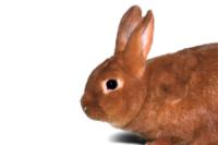 rabbit homepage
