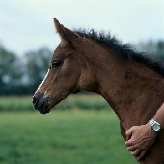 Image of foal with Strangles