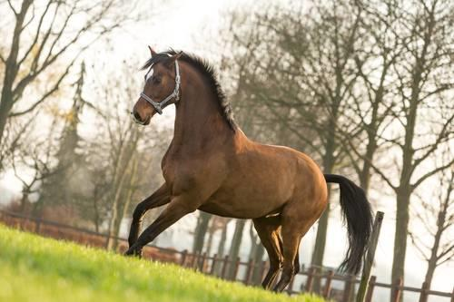 Image of horse with tetanus
