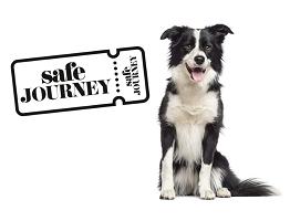 Travelling Pets Safe Journey Collie