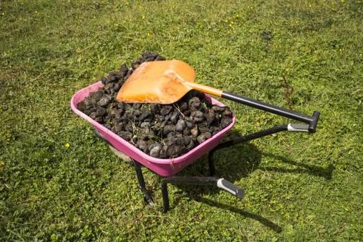 Image of horse faeces in wheelbarrow