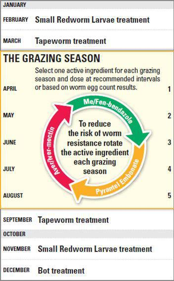 Worming Programme infographic