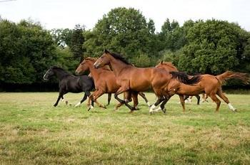 Image of horses in field