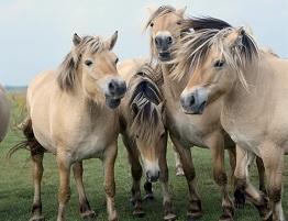 Image of ponies