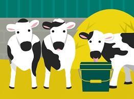 Disease? Not On My Farm! herd health imagery