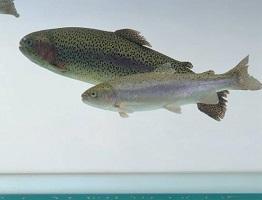 Aquaculture image