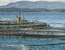 Image of a salmon farm