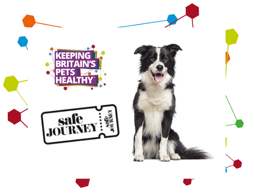 Image of a border collie next to the Keeping Britain's Pets Healthy and Safe Travel logos