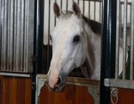 Image of stabled horse