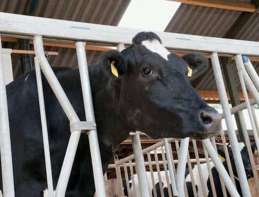 Top tips for winter housing cattle