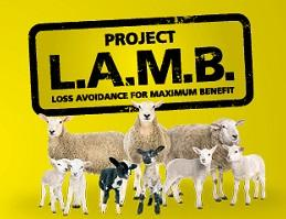 Project LAMB imagery