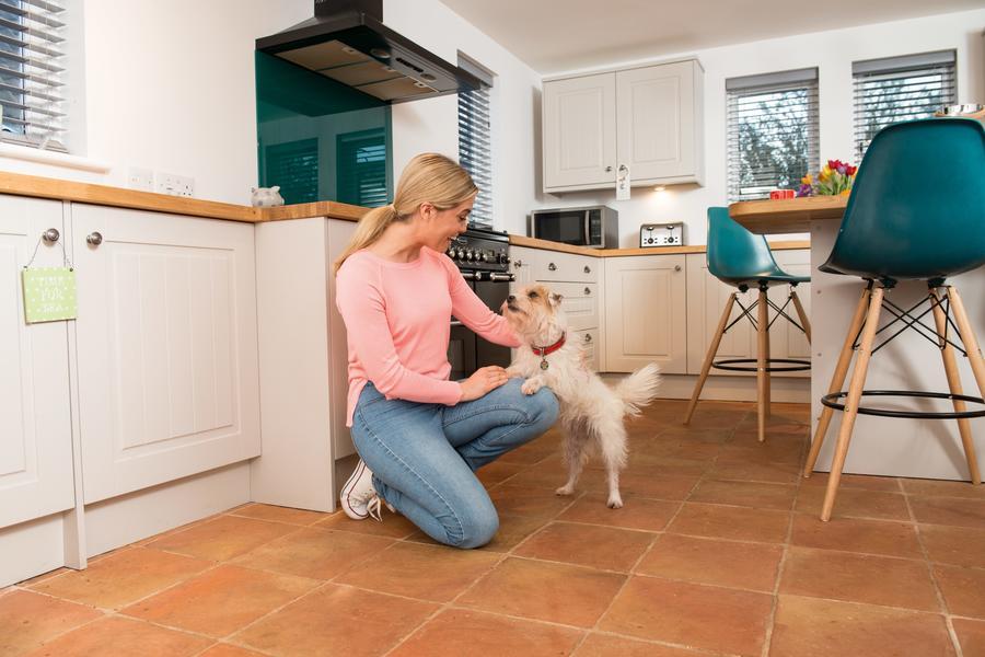 Dog in kitchen flea control parasite treatment
