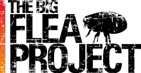 Big Flea Project Logo