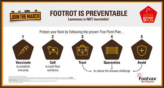 Image of MSD Animal Health footrot is preventable infographic