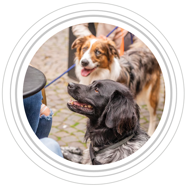 Image of two dogs facing a table and their owner at a cafe in grey circles