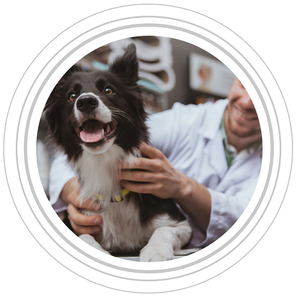 Image of a vet holding a collie facing the camera in grey circles