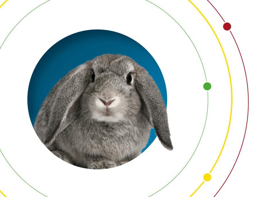 Rabbit Disease information from Nobivac Myxo-RHD PLUS