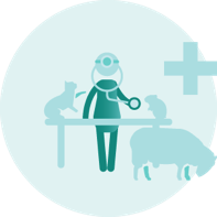 I am a Vet, Nurse, SQP or other animal health professional