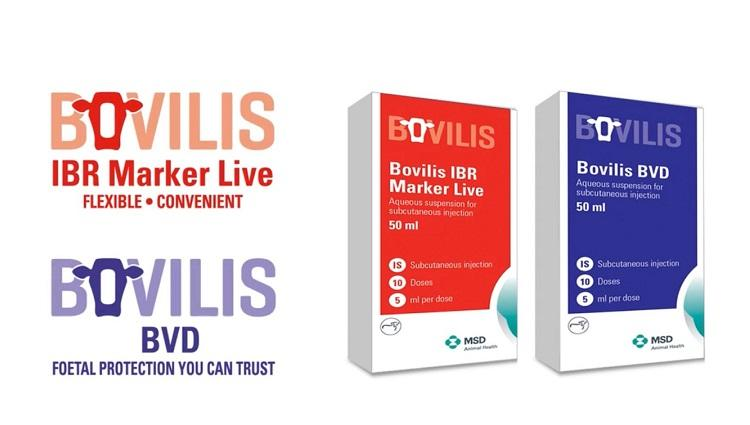 Video to demonstrate mixing of Bovilis IBR live