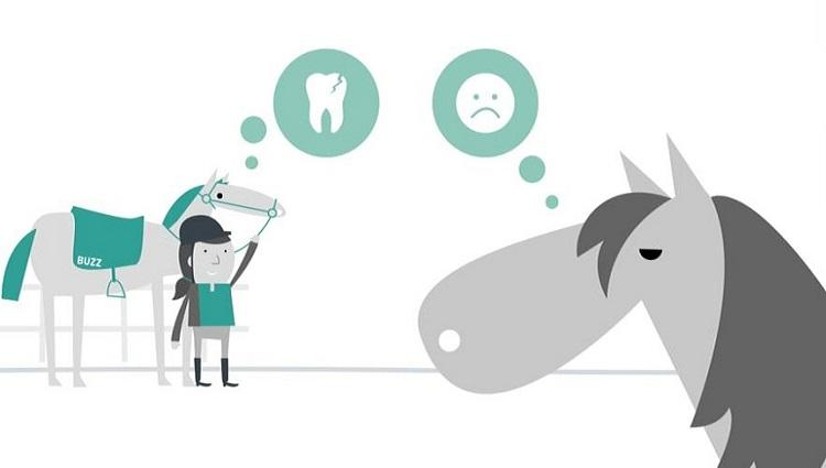 Keeping Britain's Horses Healthy 'Thinking About Dentistry' animation image