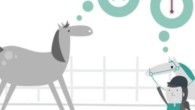Keeping Britain's Horses Healthy animation image: Thinking About Vaccination