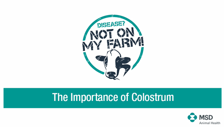 Importance of colostrum video image